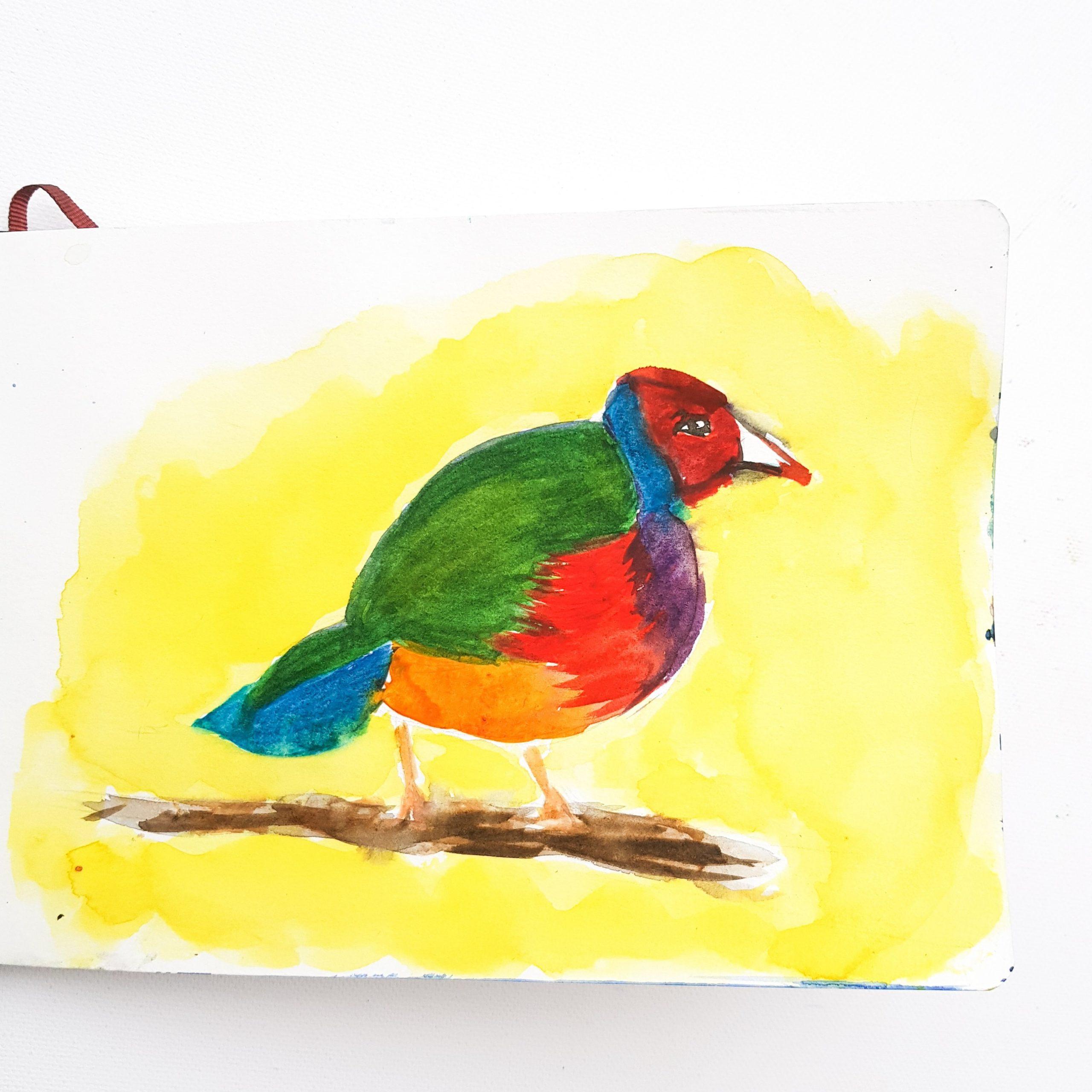 colourfulbird.jpg